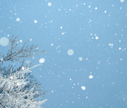 snowflakes in the sky